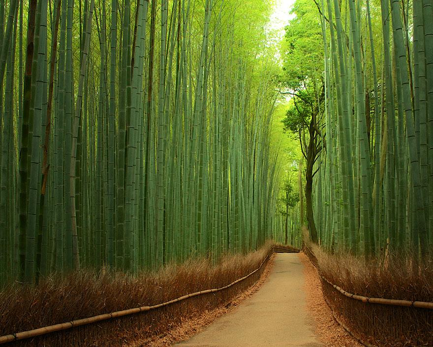 une-Forêt-de-Bambous-Japon