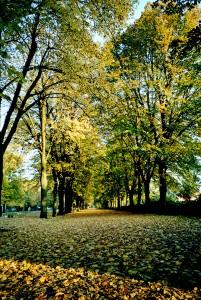 p7_arbres