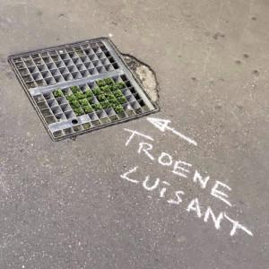 TROENE LUISANT_opt