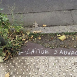 laitue sauvage_opt