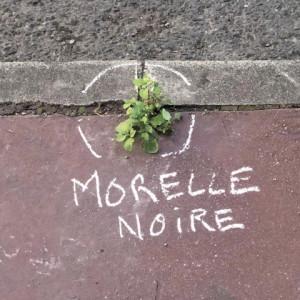 morelle noire_opt