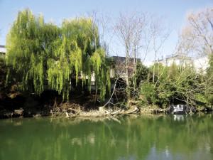 Suite aux crues de février/mars un limon crayeux a séché sur les berges de Seine.